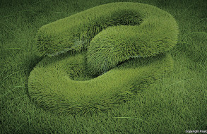 Visual Experiment - Grass